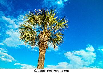Palmetto tree set against a sunny blue Carolina sky