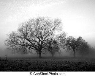 afuera, de, el, niebla