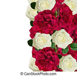 agancsrózsák, fehér, határ, piros