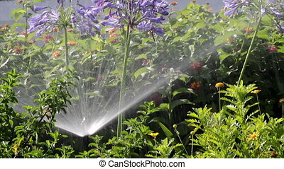 Agapanthus Flowerbed Irrigation