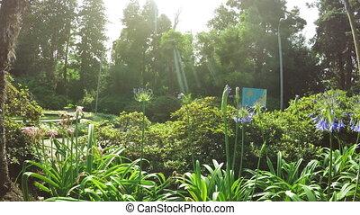 Agapanthus umbrella - Agapanthus Flower umbrella in dew and...