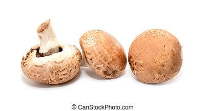 agaricus bisporus - Agaricus bisporus edible mushrooms...