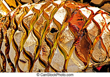 Agave Abstract - Agave Fruit Used to Produce Tequila in...
