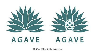 agave - Agave, mexican plant for distill tequila