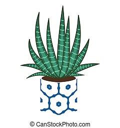 Agave home plant in a pot. - Agave home plant in a ceramic ...