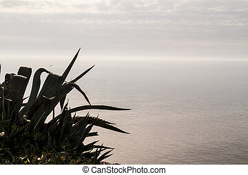 Agave on rocky shore