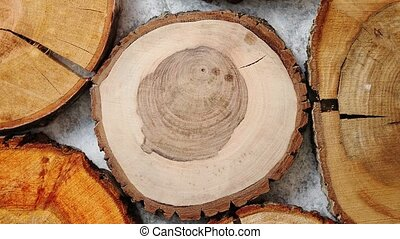 Aged, cracked, wooden, circular tree section with rings - A...