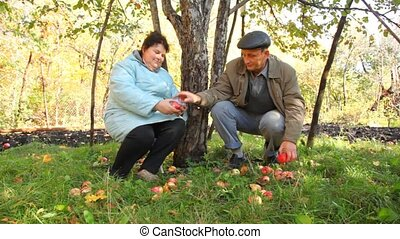 aged man gathering apples and giving to aged woman