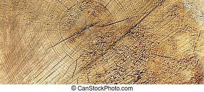 Aged Pine Wood Grain Wide Texture Close-up