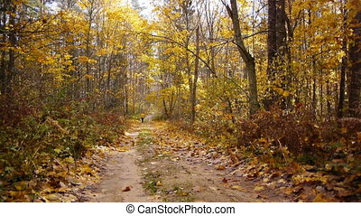 Aged sporty woman jog in autumn forest - View of aged sporty...