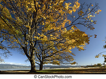 Aged strong tree in the fall colours