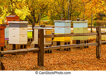 Aged Wooden Bee Hives in Autumn Setting