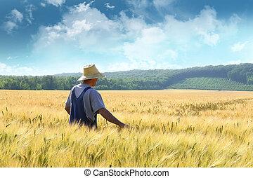 agerdyrker, gå, igennem, en, hvede felt