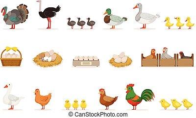 agerjord, fugle, vokse, by, kød, og, by, lægge ægger, organisk farming, sæt, i, vektor, illustrationer, hos, dyr