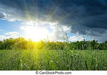 agerjord, sommer, korn, i tiltagende, felt