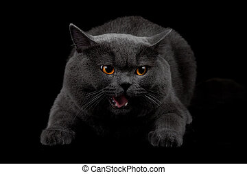 Aggressive black cat in dark room