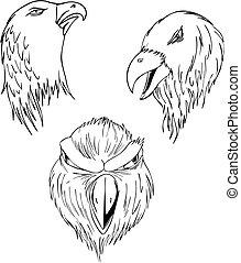 Aggressive eagle heads