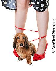 aggrovigliato, cane dachshund