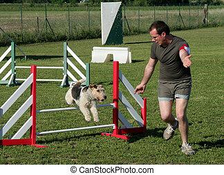 agility - training of agility