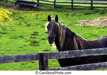 Aging Horse is Put Out to Pasture