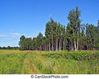 aging rural road near wood