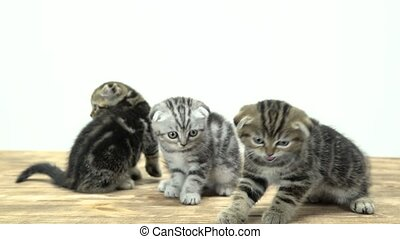 Agitated kittens run around in different directions. White...