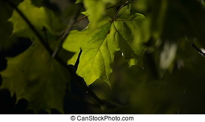 Agitated Leaves in Night - Agitated leaves in night