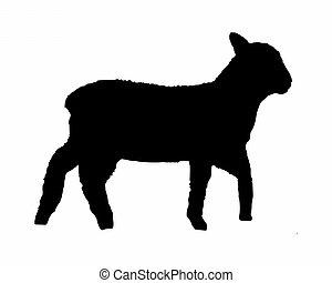 agneau, noir, blanc, silhouette