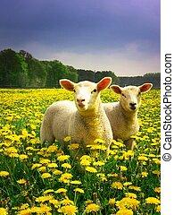 agneaux, paques