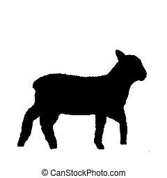 agnello, nero, bianco, silhouette