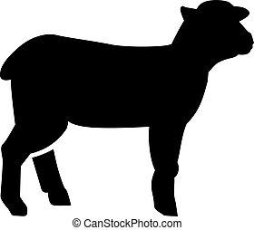 agnello, silhouette