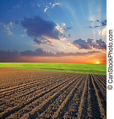 agrícola, campo sol