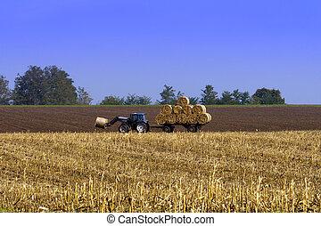 agrícola, campo, trator, trabalhando