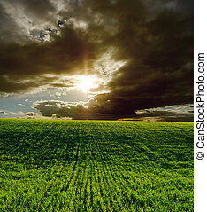 agrícola, campo verde, e, dramático, pôr do sol