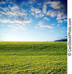 agrícola, campo verde, ligado, pôr do sol