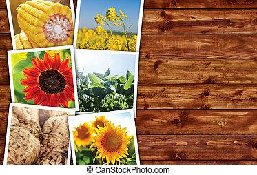 agrícola, colheitas, foto, colagem
