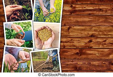 agrícola, ocupação, e, atividade, colagem, foto