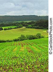 agrícola, paisagem