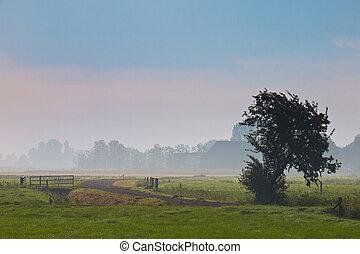 agrícola, paisagem, em, manhã, névoa