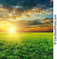 agrícola, sobre, pôr do sol, campo verde