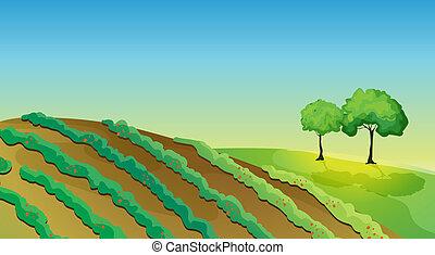 agrícola, tierra, árboles