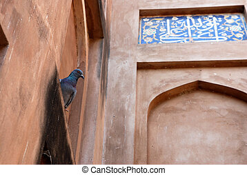 agra, inde, architecture, colombes, fort
