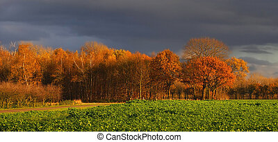 agradável, algum, outono, colorido, paisagem