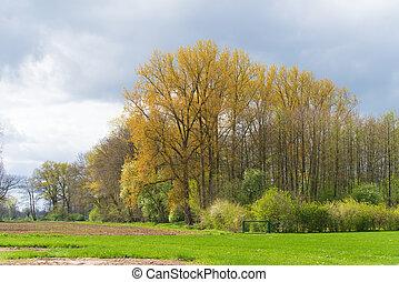 agradável, primavera, paisagem