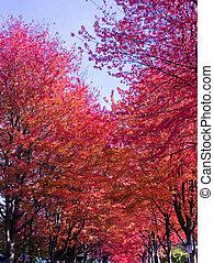 agradable, otoño sale, agradable, neigborhood-3