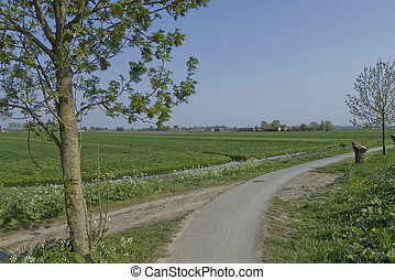 Agrarian landscape in Holland
