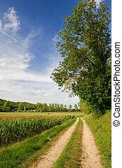 Agraric landscape in summer