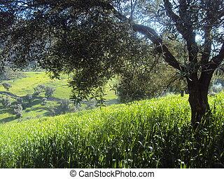 agricole, paysage, 自然