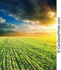 agricole, vert, champ coucher soleil