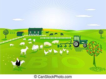 agricoltura, organico